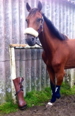 Aswad amputee horse