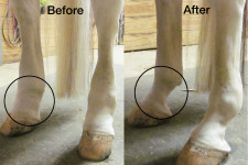 Equiflexsleeve before and after